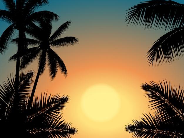 Céu do sol com silhueta de árvore de palma