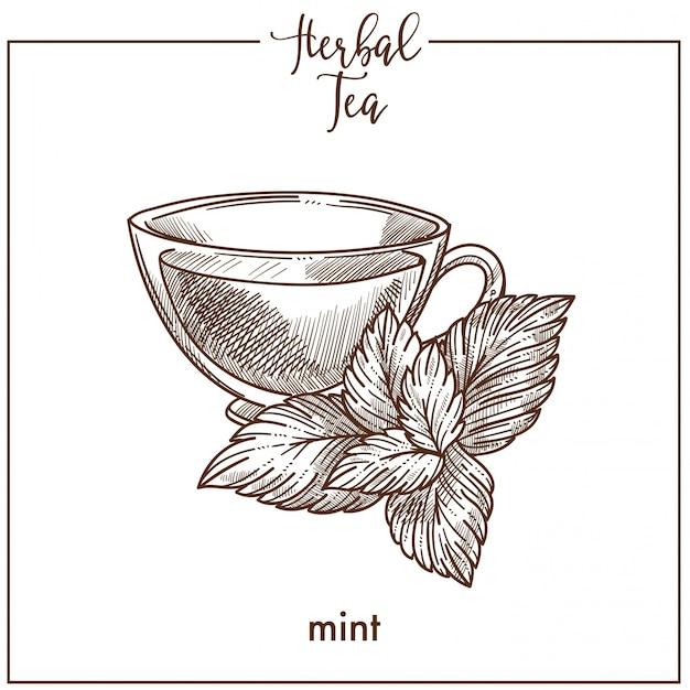 Chá de ervas com hortelã fresca em copo de vidro
