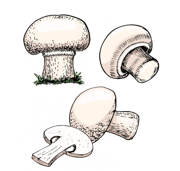 Champignon cogumelos
