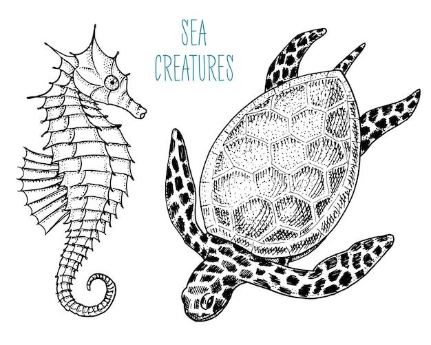 Cheloniidae da criatura do mar ou tartaruga verde e cavalo marinho. mão gravada desenhada no desenho antigo, estilo vintage.