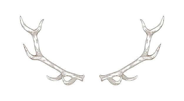Chifres de veado ou rena elegantes desenhados à mão com contornos na superfície branca