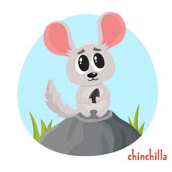 Chinchila em estilo cartoon. animal selvagem isolado no fundo branco.