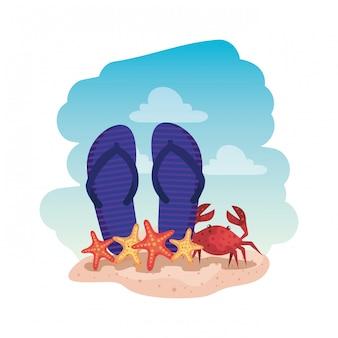 Chinelos de verão e caranguejo com estrela do mar