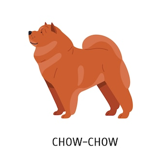 Chow chow. lindo adorável cão de companhia com pele enrugada e pêlo denso isolado no fundo branco. adorável animal doméstico ou animal de estimação de raça pura. ilustração vetorial no estilo cartoon plana.