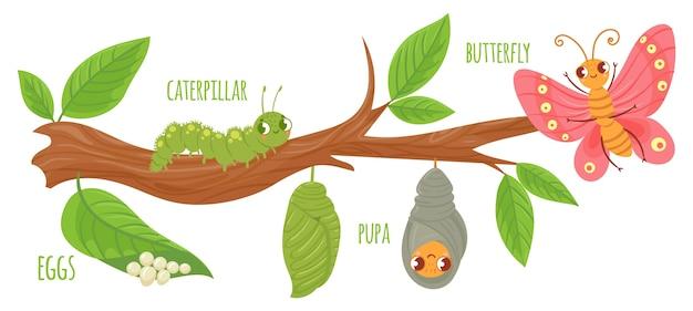 Ciclo de vida de borboleta de desenho animado