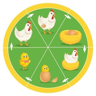 Ciclo de vida de frango