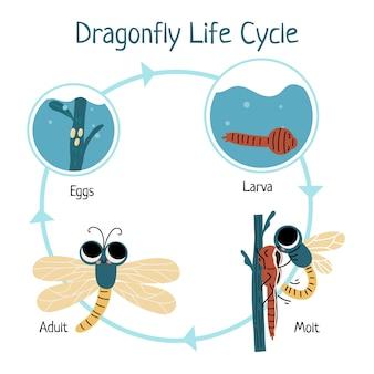 Ciclo de vida de libélula desenhada à mão