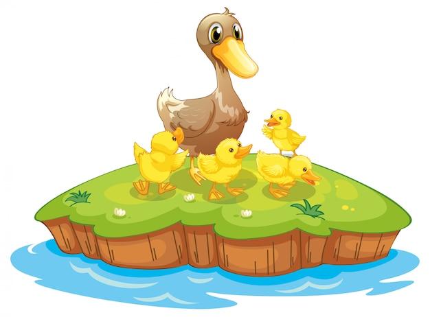 Cinco patos em uma ilha