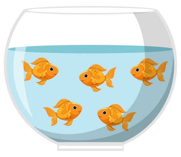 Cinco peixes dourados em uma tigela grande no fundo branco