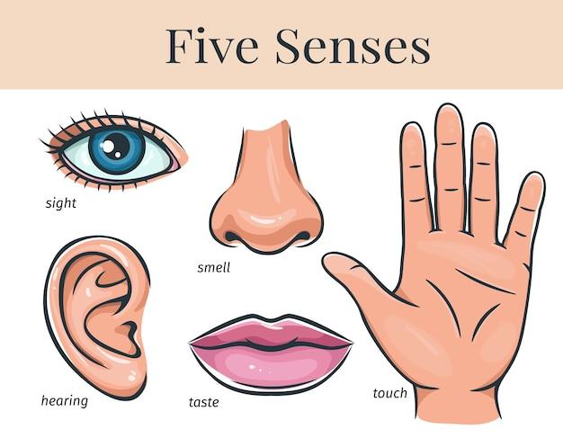 Cinco sentidos humanos, tato, olfato, audição, visão, paladar. lábios, ouvidos, nariz, olhos e mãos.