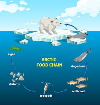 Círculo da cadeia alimentar ártica