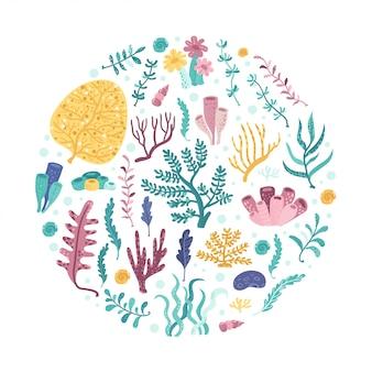 Círculo de algas marinhas. ilustração vetorial para seu design