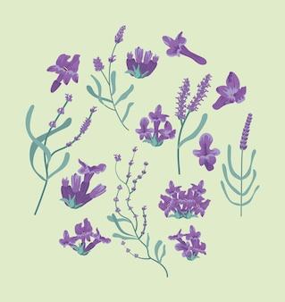 Círculo de flores de lavanda