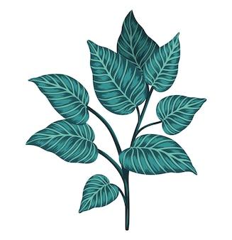 Clip-art de planta tropical isolado no branco
