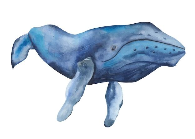 Clipart de aquarela baleia azul