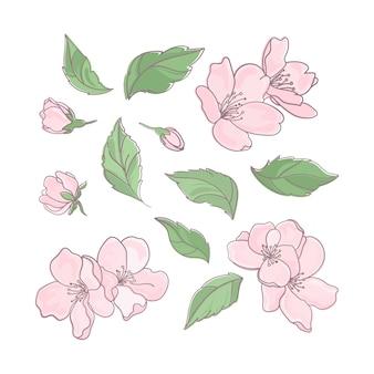 Clipart de decoração floral flor sakura