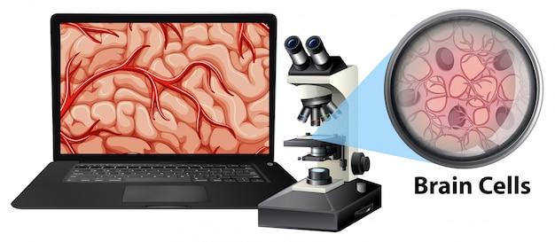 Close up de células cerebrais com mircoscope e laptop