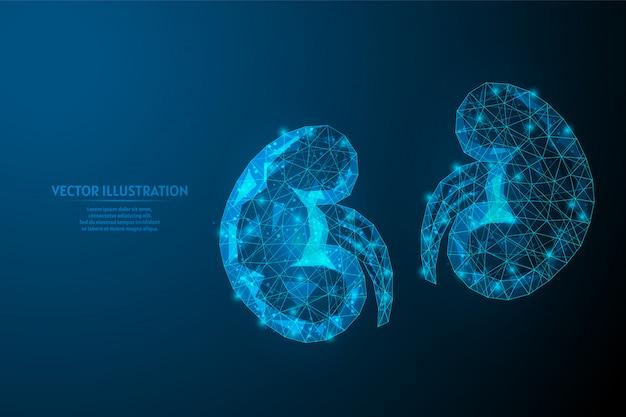 Close-up de rim humano. anatomia de órgão. pilonifrit, nefroptose, urolitíase, insuficiência renal. medicina e tecnologia inovadoras.