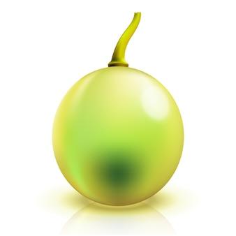 Close up de uva isolada
