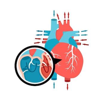 Closeup circulação sanguínea na anatomia do coração humano com fluxo de sangue de órgão interno humano ...