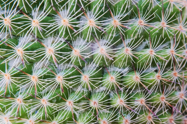 Closeup de papel de parede planta cactus