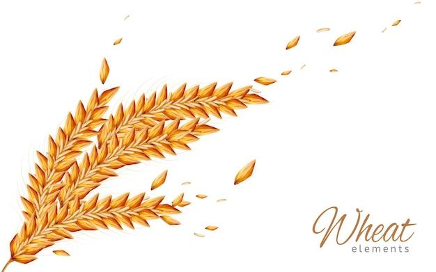 Closeup olhar para ilustração isolada de elementos de trigo
