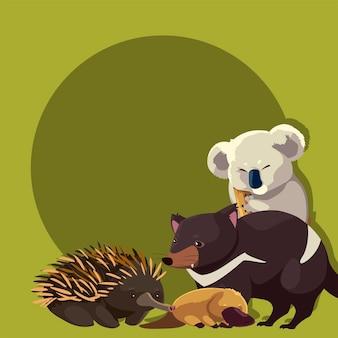 Coala ouriço-porco ornitorrinco tasmanian diabo ilustração da vida selvagem animal australiano