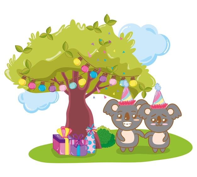 Coalas de feliz aniversário