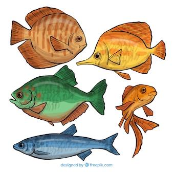 Cobrança, de, mão, desenhado, peixe