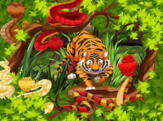 Cobras selvagens e tigre na floresta