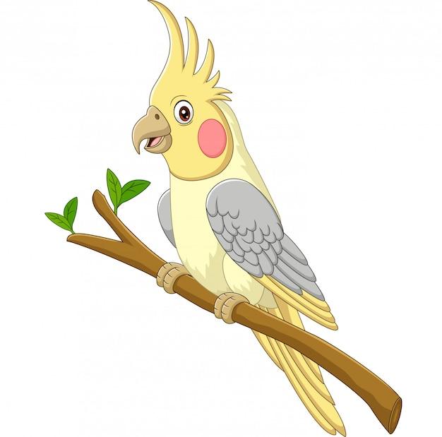 Cockatiels amarelo dos desenhos animados, sentado em um galho de árvore