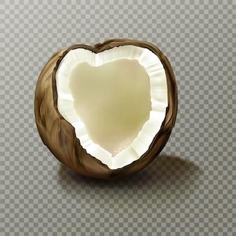 Coco realista, noz de coco vazia altamente detalhada