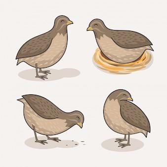 Codorniz pássaro dos desenhos animados animais fofos