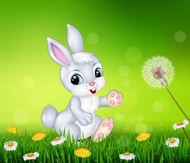 Coelhinho andando no fundo da grama
