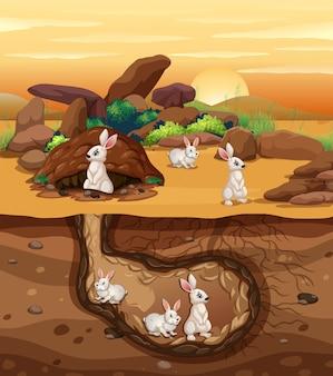 Coelhos, cavando, um, buraco