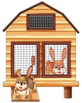 Coelhos na gaiola de madeira