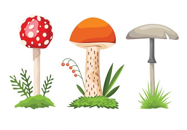 Cogumelo e cogumelo venenoso, diferentes tipos de cogumelos