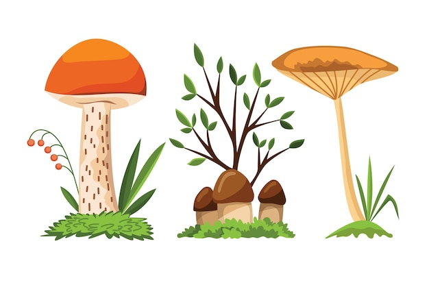 Cogumelo e cogumelo.