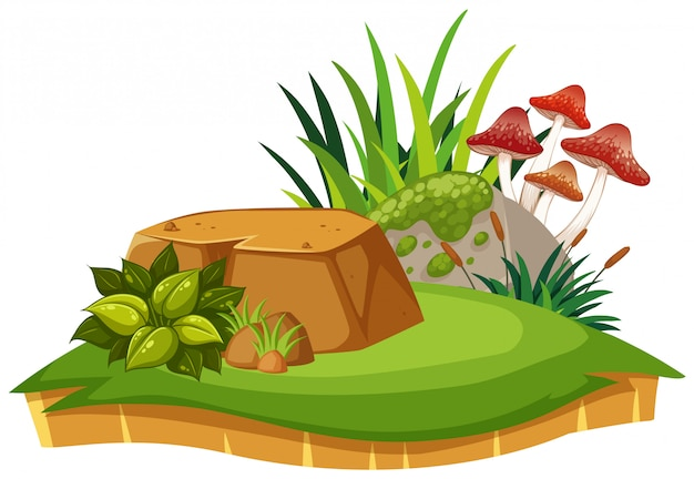 Cogumelo isolado e planta