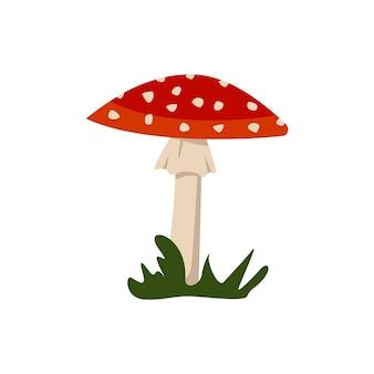 Cogumelos amanita com gorros vermelhos e manchas brancas