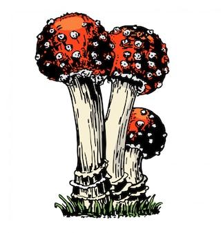 Cogumelos amanita isolado no branco