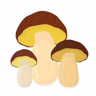 Cogumelos comestíveis, bolete. comida vegetariana crua
