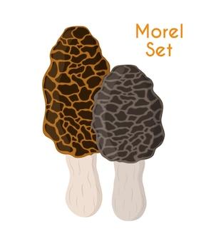 Cogumelos comestíveis, morel