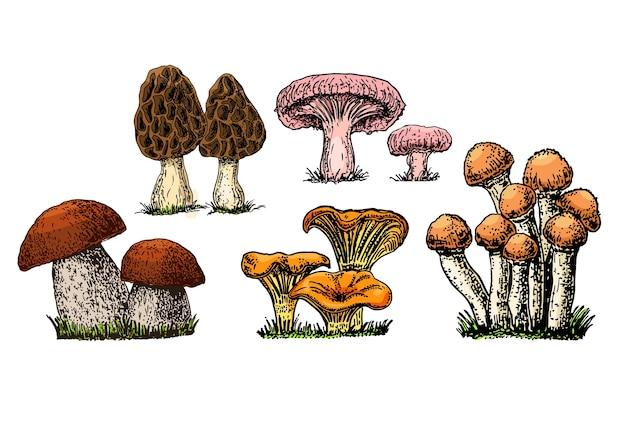 Cogumelos desenhados à mão