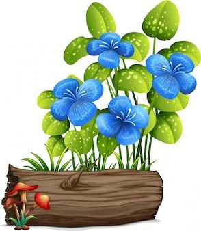 Cogumelos e flores azuis