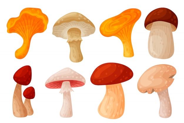 Cogumelos frescos da floresta selvagem de outono.