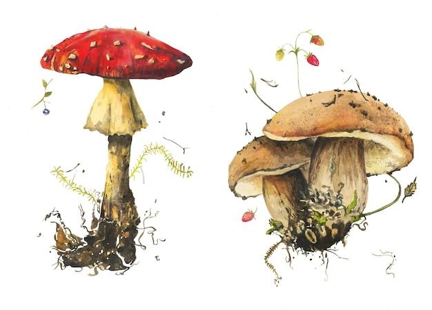 Cogumelos realistas em aquarela com bagas