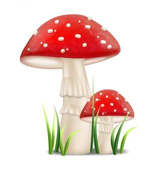 Cogumelos vermelhos