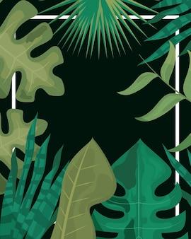 Colagem de folhas de plantas