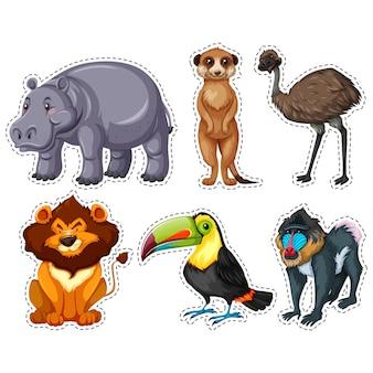 Coleção adesivos animais selvagens